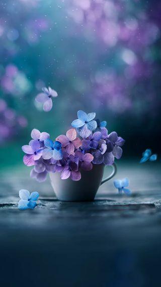 Обои на телефон фиолетовые, цветы, синие, розовые, естественные, ваза, букет