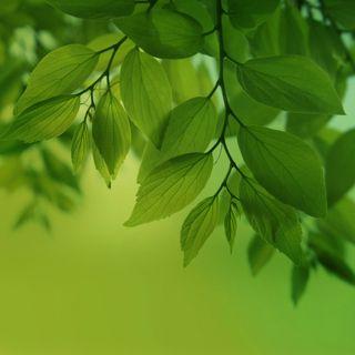 Обои на телефон макро, растения, природа, листья, зеленые, боке, green leaves