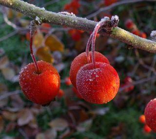 Обои на телефон рождество, праздник, zedgemas15, presents, mistletoe