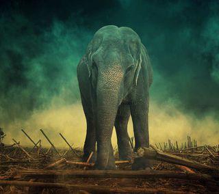 Обои на телефон слон, африка