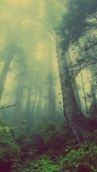 Обои на телефон туман, растения, природа, листья, лес, зеленые, деревья, foliage