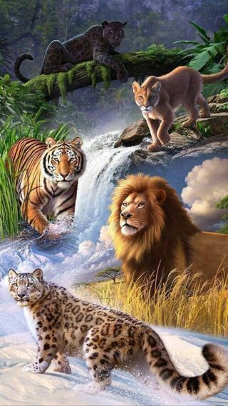 Обои на телефон ягуар, дикие, тигр, природа, пантера, леопард, лев, коты, король, животные, land