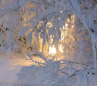 Обои на телефон страна чудес, окно, солнце, снег, светящиеся, зима, деревья, волшебные, белые, winters window