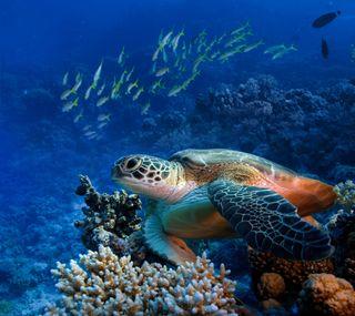 Обои на телефон черепаха, океан, море, fauna