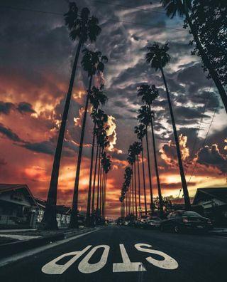 Обои на телефон пальмы, красочные, калифорния, закат, деревья