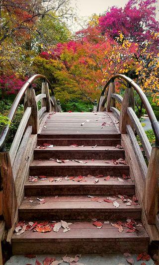 Обои на телефон мост, осень, листья, лестница