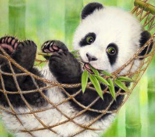 Обои на телефон панда, милые, листья, hammock