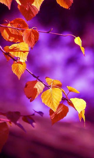 Обои на телефон боке, фиолетовые, синие, природа, осень, листья, лес, красота, золотые, s8, s7, gold leaf