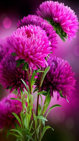 Обои на телефон весна, цветы