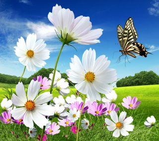 Обои на телефон маргаритка, цветы, луг, весна, бабочки
