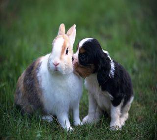 Обои на телефон щенки, поцелуй, милые, perfect
