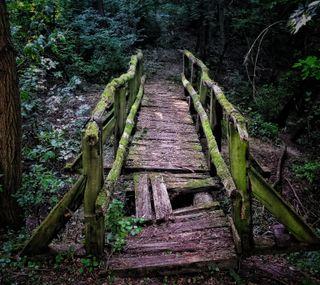 Обои на телефон деревянные, темные, природа, мост, зеленые, дерево, wooden bridge