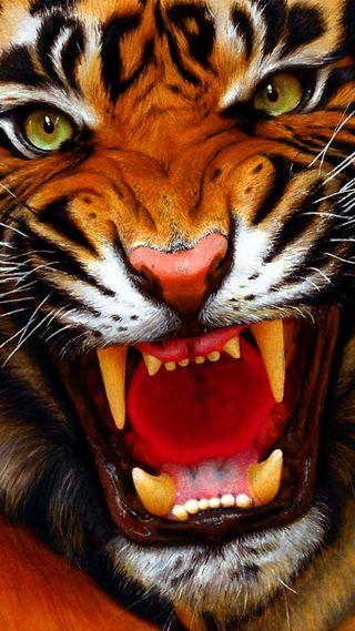 Обои на телефон тигр, животные