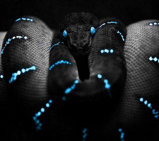 Обои на телефон змея, черные, темные, синие, рептилия, змеевидный, зло