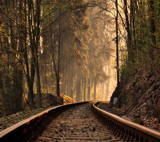 Обои на телефон взгляд, приятные, поезда, лес, колея, forest train track