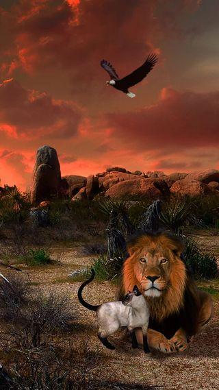Обои на телефон орел, птицы, лев, кошки, король, закат, животные