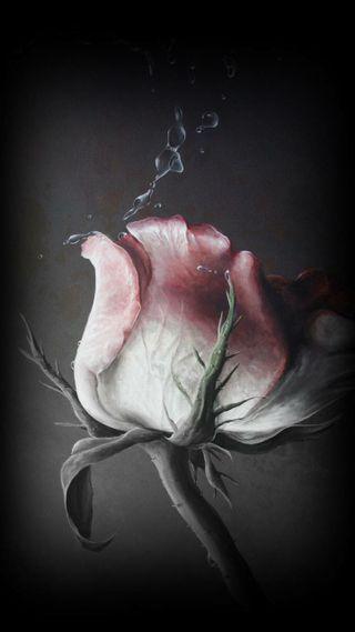 Обои на телефон эффекты, танец, розы, пришелец, лучшие, грустные, блестящие, sad rose, ballet
