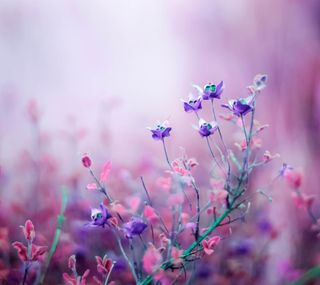Обои на телефон поле, цветы, фиолетовые, лаванда, lavender fields