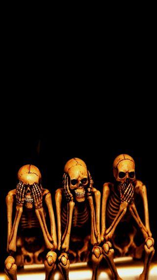 Обои на телефон скелет, череп, камни