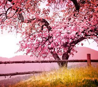Обои на телефон поле, розовые, природа, пейзаж, дерево
