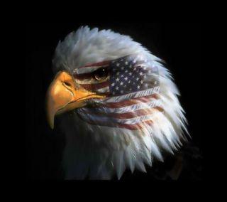 Обои на телефон птицы, орел, америка