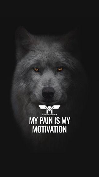 Обои на телефон успех, цитата, мотивация, волк, motivationaquotes, motivationalquote
