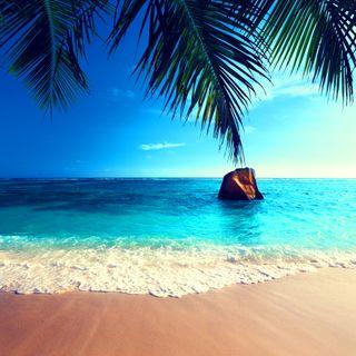 Обои на телефон пальмы, тропические, рай, природа, пляж, море