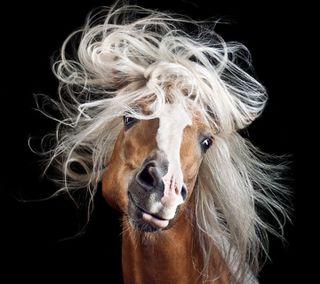 Обои на телефон лошадь, романтика