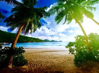 Обои на телефон тропические, рай, прекрасные, пляж, пальмы, beach palms