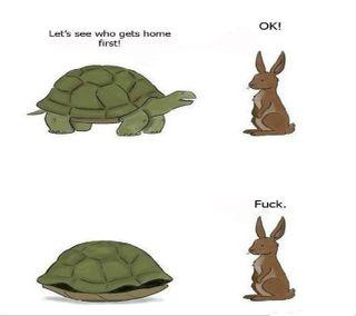 Обои на телефон черепаха, комедия, рок, мультфильмы, turtle rock