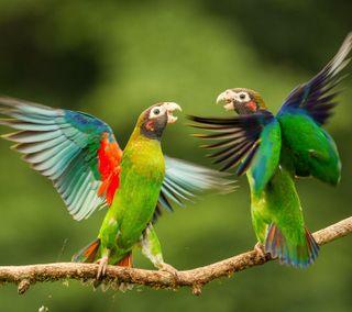 Обои на телефон попугай, птицы, летать, зеленые