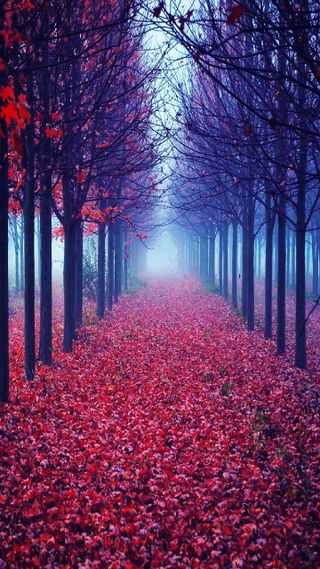 Обои на телефон лес, природа, красые