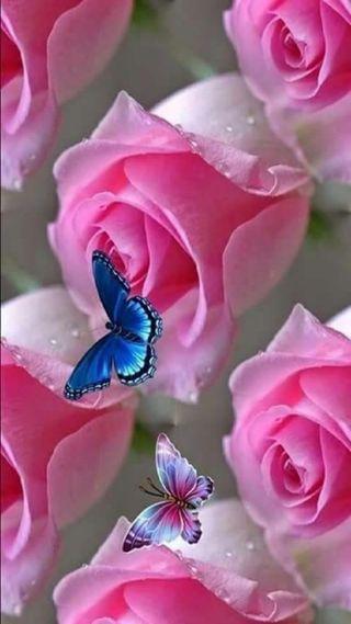 Обои на телефон бабочки, розы