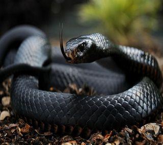 Обои на телефон змея, черные, thseth, srtjsr, black snake