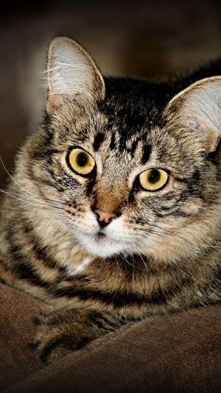 Обои на телефон коты, милые, кошки, глаза, tabby, cats eyes