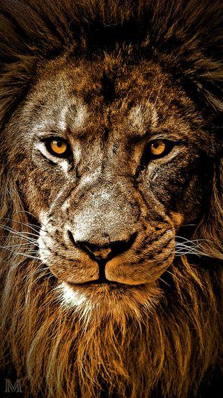 Обои на телефон лев, piece