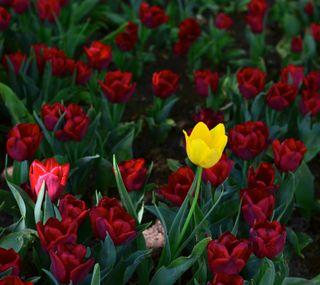 Обои на телефон сад, цветы, розы, красые, другой, gul, different rose, cicek