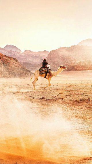 Обои на телефон пустыня, природа, животные, sahara, camel