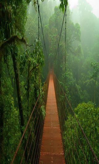 Обои на телефон туман, приятные, природа, новый, мост, лес, естественные, misty