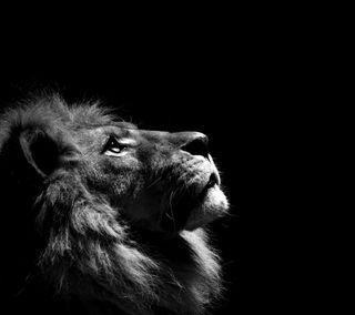 Обои на телефон лев, король, аслан, lion aslan gs