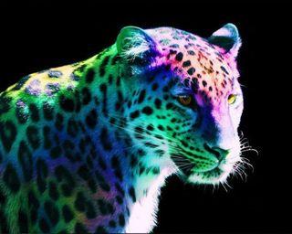 Обои на телефон леопард, коты, животные, leopards, leopard wallpaper