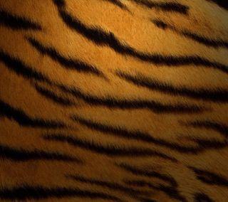 Обои на телефон тигр, мех