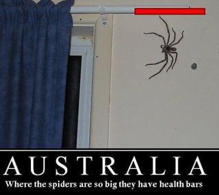 Обои на телефон паук, австралия, so big, big