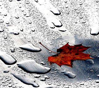 Обои на телефон холодное, рокки, природа, новый, милые, любовь, листья, лед, крутые, вода, love, leaf n water hd, 2012