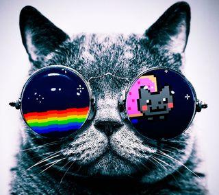 Обои на телефон хаха, неоновые, мяу, лол, забавные, милые, кошки, котята, животные, nyan, lol