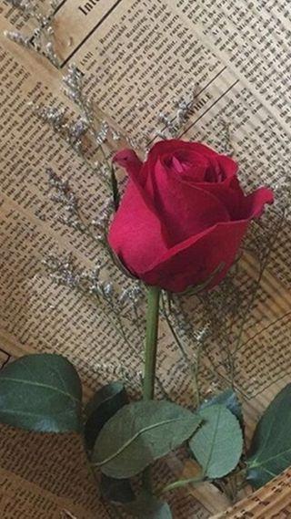 Обои на телефон розы, красые