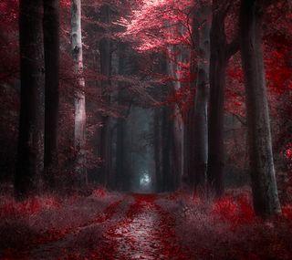 Обои на телефон осень, природа, красые