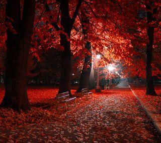 Обои на телефон романтика, осень, ночь, красые, romantic night hd, lamps