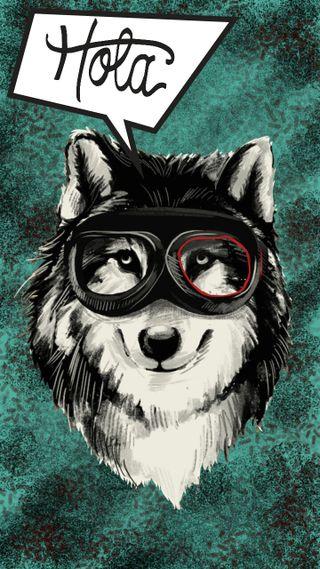 Обои на телефон очки, мексика, собаки, испанские, волк, hola