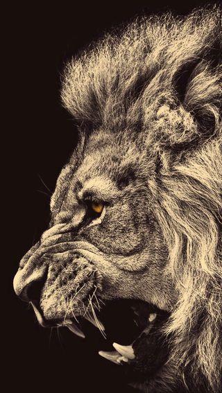 Обои на телефон лицо, лев, злые